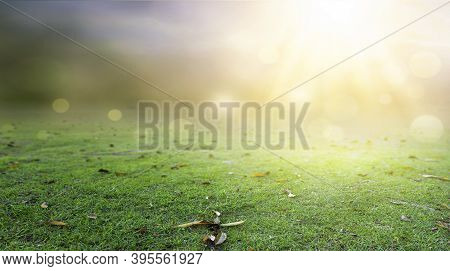 Natural Background Concept: Abstract Blur Green Color  Background