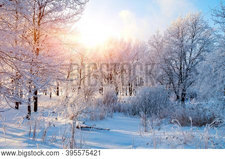 Winter landscape, frosty winter trees in snowy winter forest in the sunny winter morning. Tranquil winter nature in winter morning sunlight, winter forest nature, winter forest landscape. Winter trees covered with frost, winter background