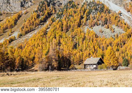 Swiss Alps Mountain With Larch Trees Over The Hills In Fall Season