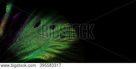 Bright Colorful Wing Of A Tropical Butterfly On Black Copy Space. Golden Butterfly Wing Close Up. Gr