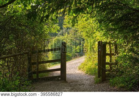 Path And Gate In North Downs Countryside, Box Hill, Dorking, Surrey, England