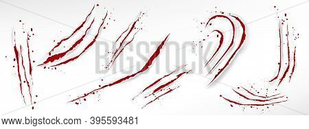 Cat Claw Scratches With Blood Drops, Red Torn Slashes From Wild Animal, Tiger, Bear Or Lion Paws Iso