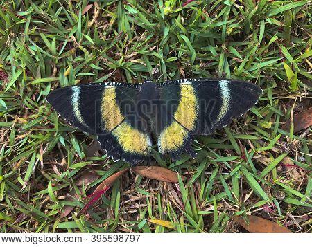 A Butterfly On A Green Meadow In Australia