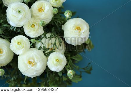 Ranunculus Flower.buttercup Flowers.delicate White Spring Flowers On A Bright Blue Background.ranunc