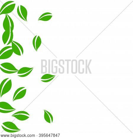 Falling Green Leaves. Fresh Tea Neat Leaves Flying. Spring Foliage Dancing On White Background. Aliv