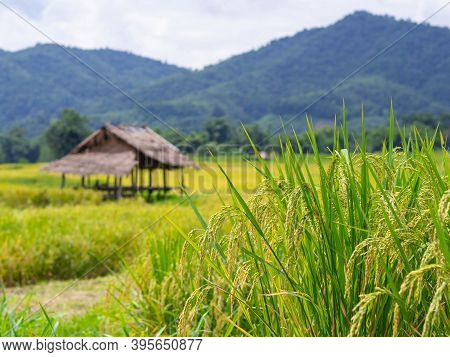 Beautiful Scenic View Of Rice Fields With Sky And Mountain Background. The Agricultural Field. Space