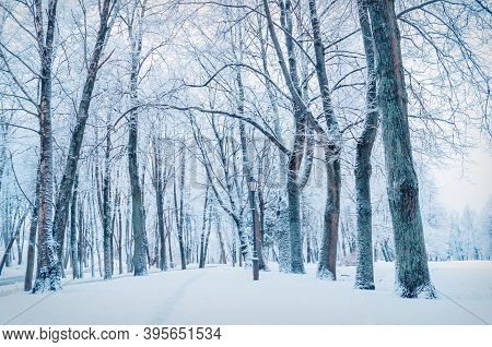 Winter landscape, winter alley and frosty winter trees. Colorfuyl cold winter nature, cold winter landscape, winter natural park view with winter trees along the winter alley