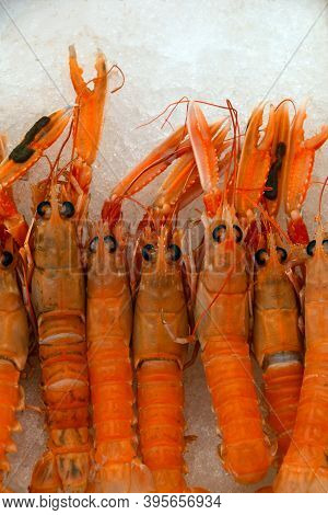 Close Up Fresh Catch Of Raw Red Langoustines (nephrops Norvegicus, Norway Lobster, Dublin Bay Prawn