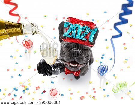 French Bulldog Dog Celebrating New Years Eve With Owner And Champagne  Glass Isolated On Serpentine