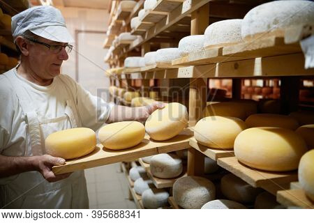 Cheese maker at the storage with shelves full of cow and goat cheese