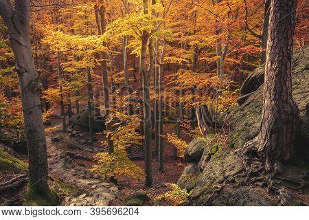Forest In Karkonosze National Park. Jelenia Gora, Lower Silesia, Poland.
