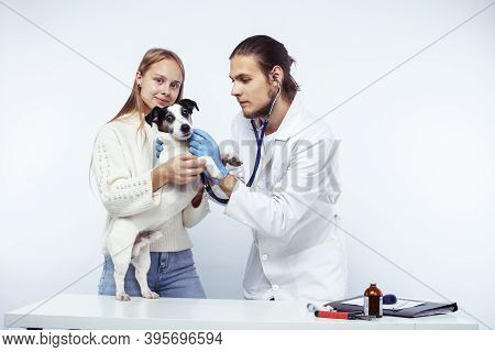 Young Veterinarian Doctor In Blue Gloves Examine Little Cute Dog Jack Russell Isolated On White Back