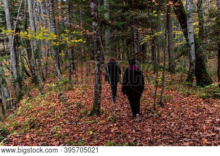 Group Of Travelers In Autumn Forest On A Cloudy Day