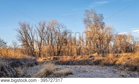 Riparian forest along the Poudre River in northern Colorado, fall scenery