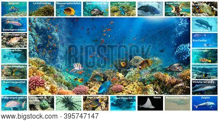 The Underwater Atlas Or Marine Life Identification Guide. Collection Of Tropical Fishes. Catalog Fro