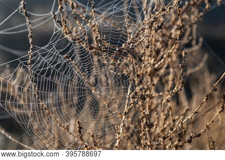 Spider Web With Dew Water Droplets At Sunrise Early Morning