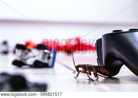 American Cockroach, American Periplaneta, Messy Children's Room. Pest Concept Indoors, Pest Control