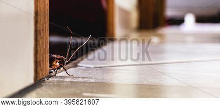 Cockroach Hidden Inside The House, Pest Problems And The Need For Detection