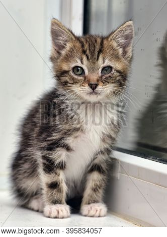 Little Striped With White Kitten On Window Sill At Home