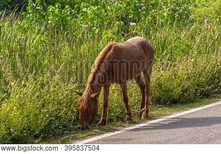 Hampi, Karnataka, India - November 4, 2013: One Horse Left Alone Along Road To Wander And Eat Grass