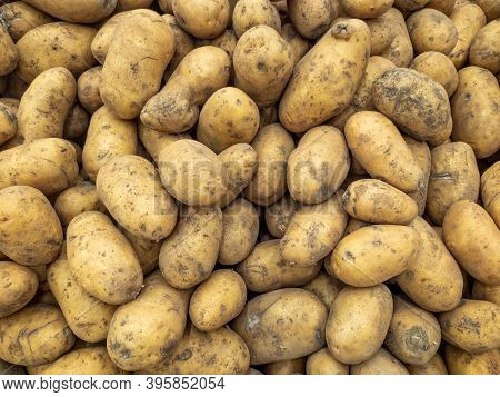 A Background Of A Large Number Of Medium-sized Potato Tubers. Background From Vegetables On A Shop W