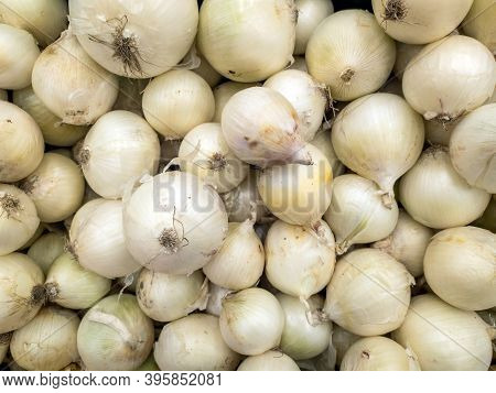 A Background Of A Large Number Of Medium-sized White Onions. Background From Vegetables On A Shop Wi