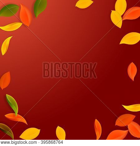 Falling Autumn Leaves. Red, Yellow, Green, Brown Neat Leaves Flying. Vignette Colorful Foliage On Ma