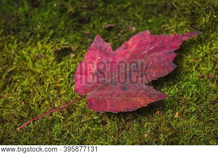 Autumn Colors- Yellow Leaves. Background Green Moss
