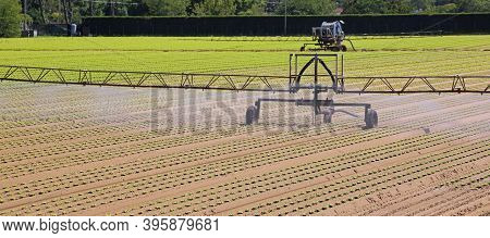 Automatic Irrigation System Of The Cultivated Field With The Green Lettuce During The Drought