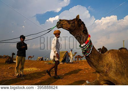November 2019 Pushkar,rajasthan Indian Cameleers With Their Camel In Sand Dunes Of Thar Desert With