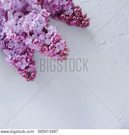 Top View Of A Lush Flowering Branch Of Lilac On A Gray Concrete Background. Free Space For Your Prod