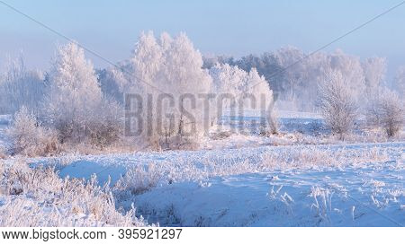 Winter Nature Landscape In The Frosty Morning. Amazing Winter A Snowy Scene In The Sunshine. Christm