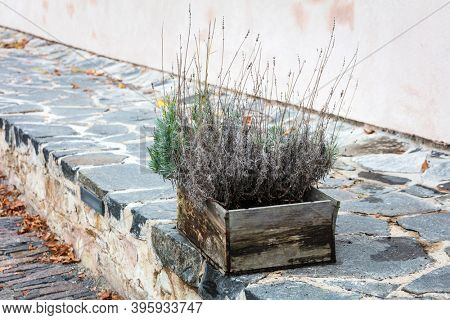 dry plants in an old wooden box