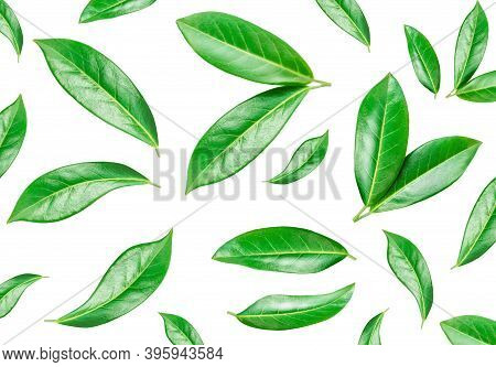 Citrus Leaf Pattern. Green Orange Leaves Isolated On A White Background. Top View. Flat Lay
