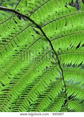 A Perfect Fern Leaf