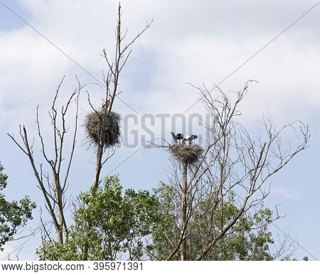 View Of Two Stork Nests With Birds