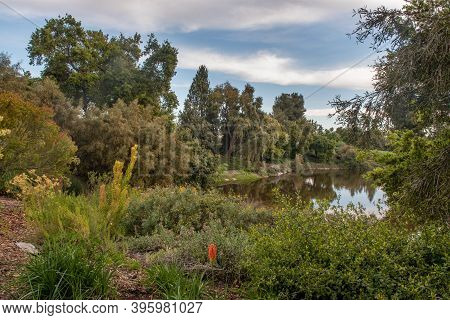 Spafford Lake At The Uc Davis Arboretum In The Spring, On A Sunny, Blue Sky Day With Few Clouds, Typ
