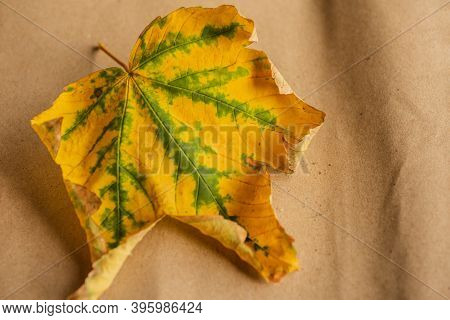 Autumn Leaves On The Paper Sheet. Autumn Leaf On Paper Background