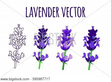Purple Hand Drawn Lavender Vector Illustration Bundle Set With 4 Different Style