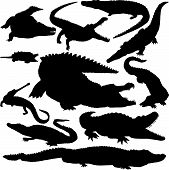 11 pieces of detailed vectoral crocodile silhouettes. poster
