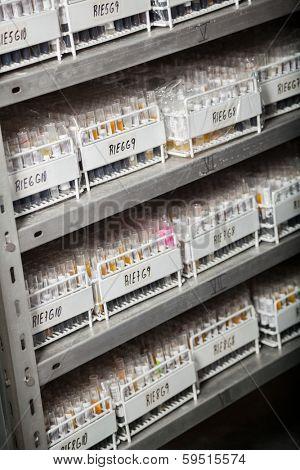 Racks of test tubes on shelves in medical laboratory