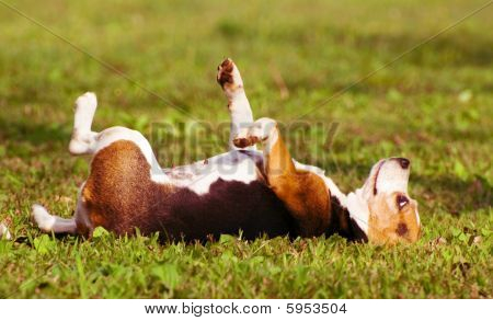 The dog lie on grass with day dreams poster