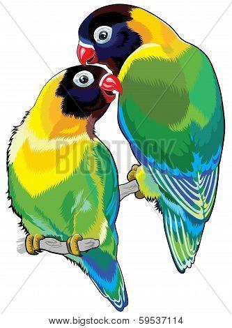 pair of masked lovebirds