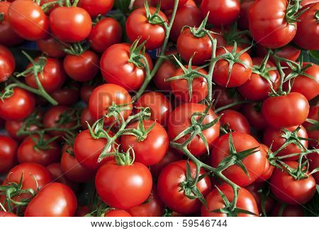 Many Ripe Red Tomatoes