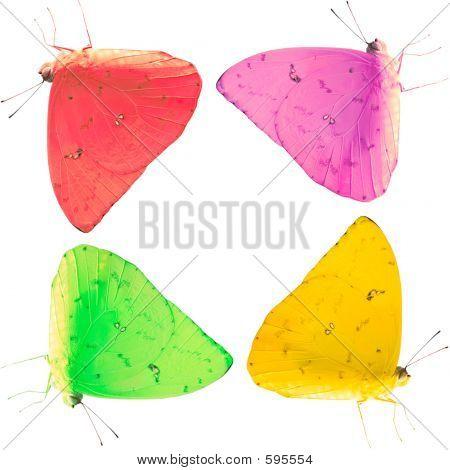 Colored Butterflies In A Pattern