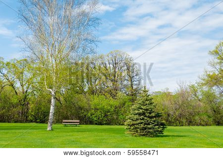 beautiful sunny day in park at spring time