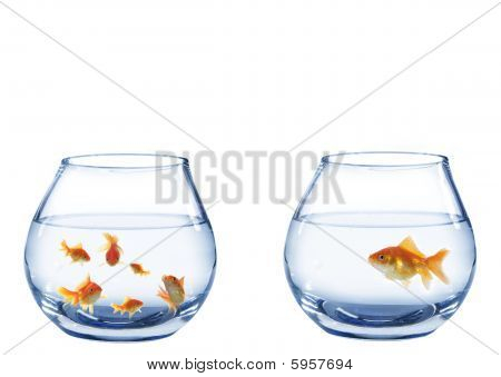 Two Aquaria's From Fish
