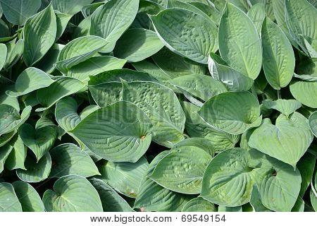 Luscious Foliage