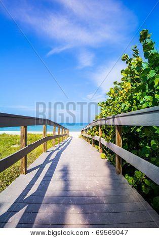 Boardwalk Among Sea Oats To Beach In Florida