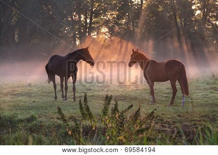 horses on pasture in morning misty sunbeams poster